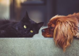 Taking Care of Your HVAC When You Have Pets